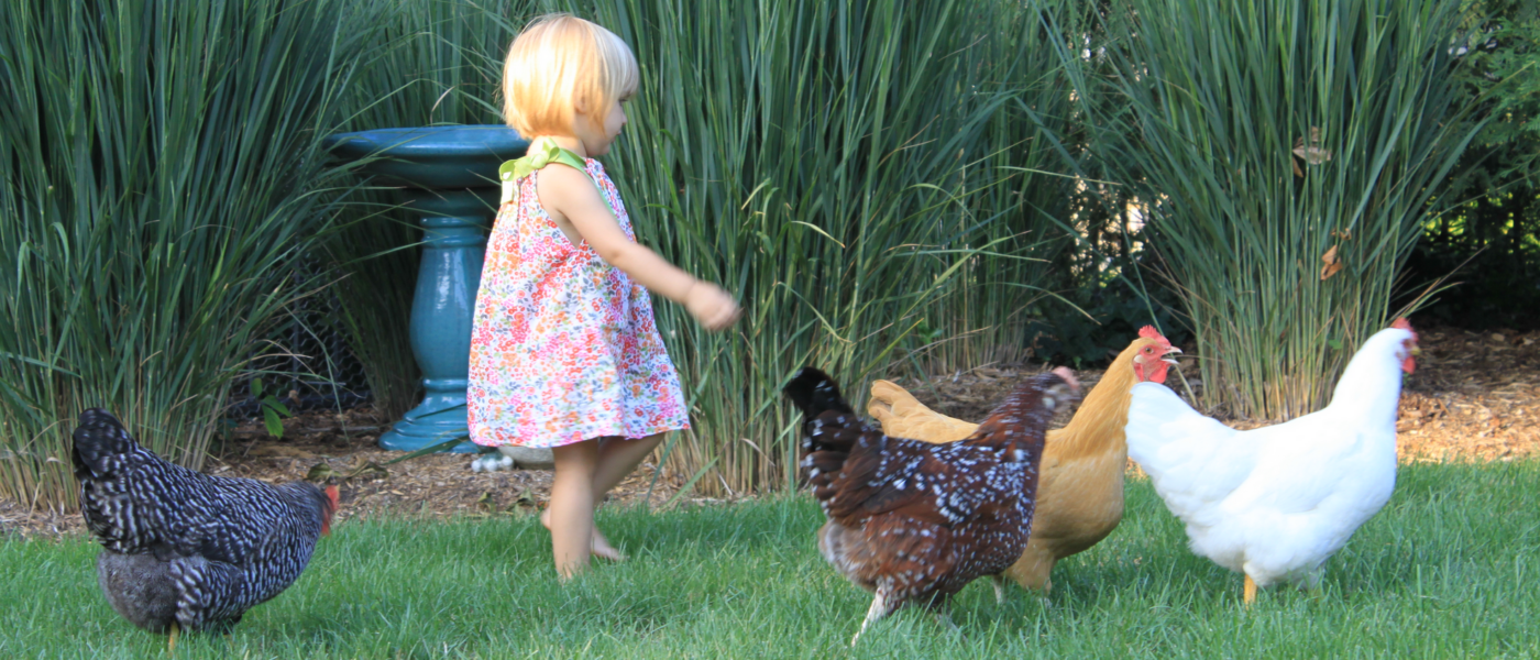 Chicken Keeping in Australia Perfect for Families and Kids