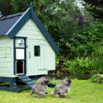 Chickens outside coop ChickenGuard